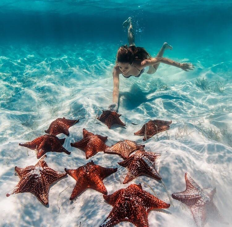 ocean, paradise, starfish and tropical