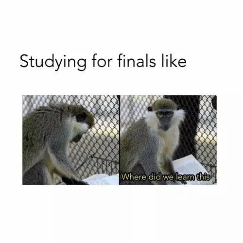 finals, lol, studying, funny, monkey - image #4162756 by winterkiss on ... Studying For Finals Funny