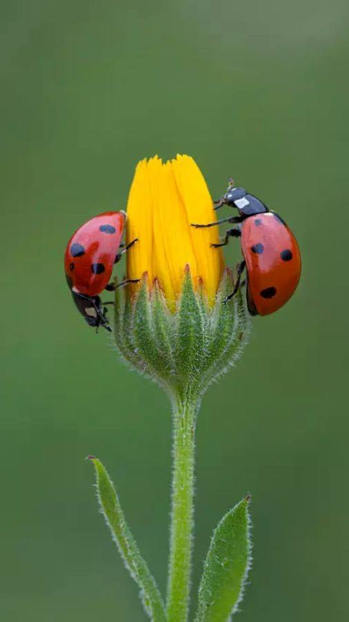 colorful, flowers, ladybug, nature, spring