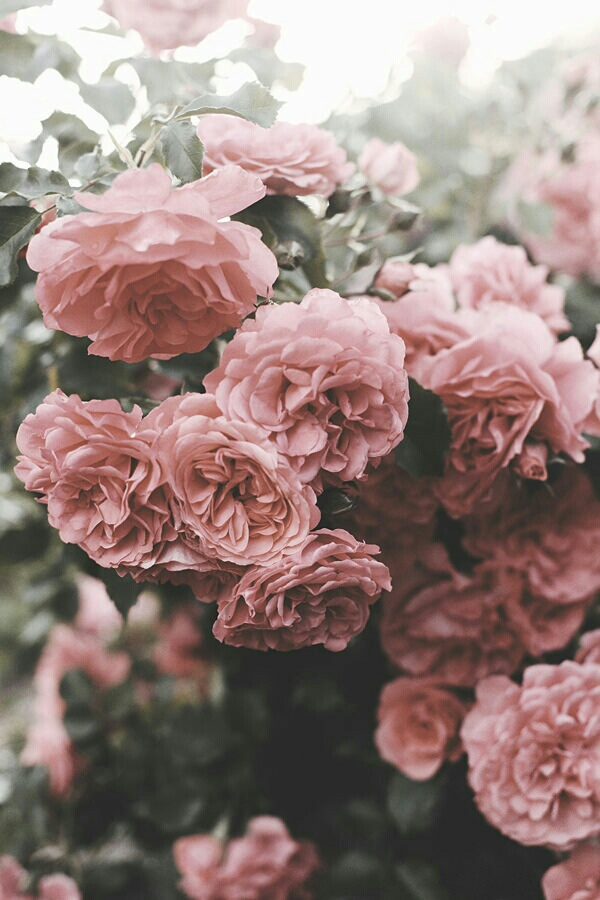 alternativo, backgrounds, flowers, indie, pink - image ...