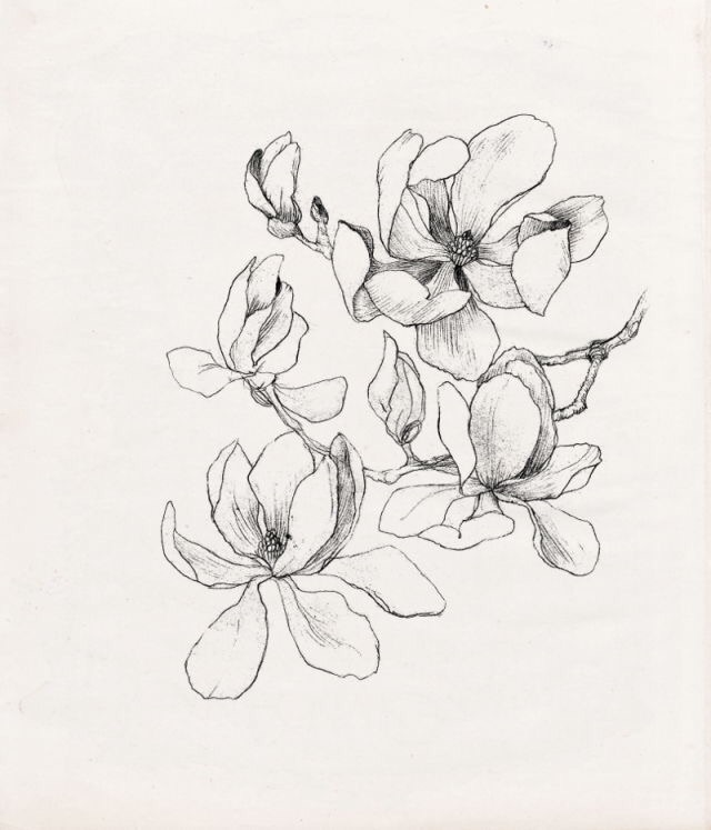 drawing, flowers and paint