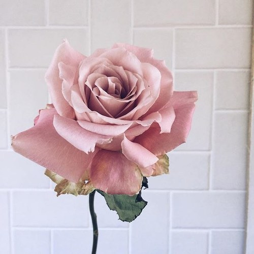 flower, love, rose and yes