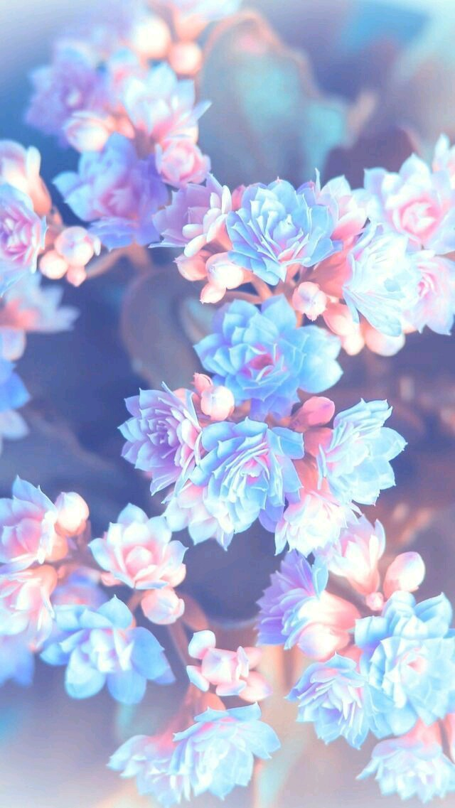 blue, cute, flowers and love