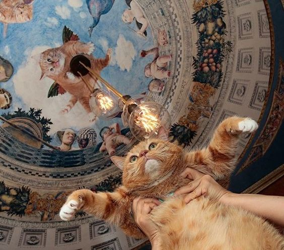 art, cat, europe and funny