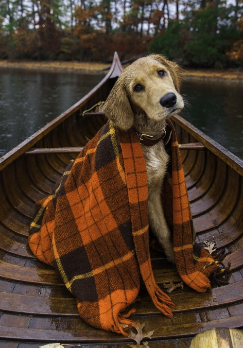 animals, boat, camping and country