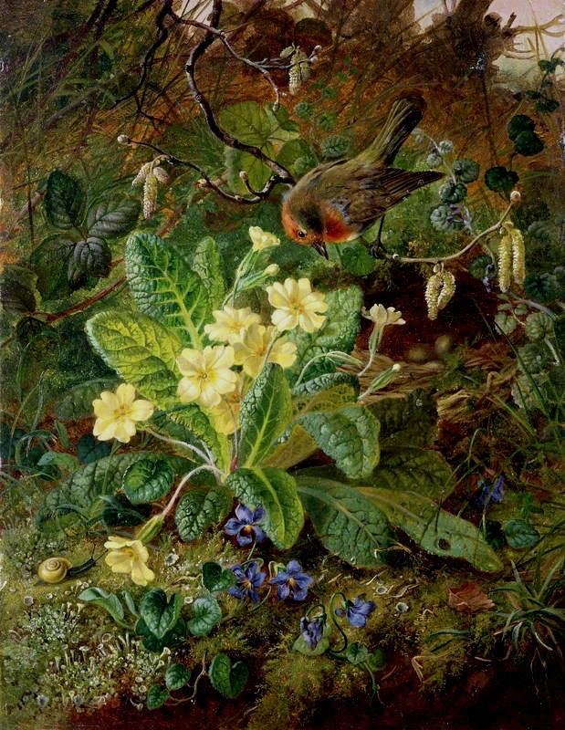 nature, robins, flower and woodland