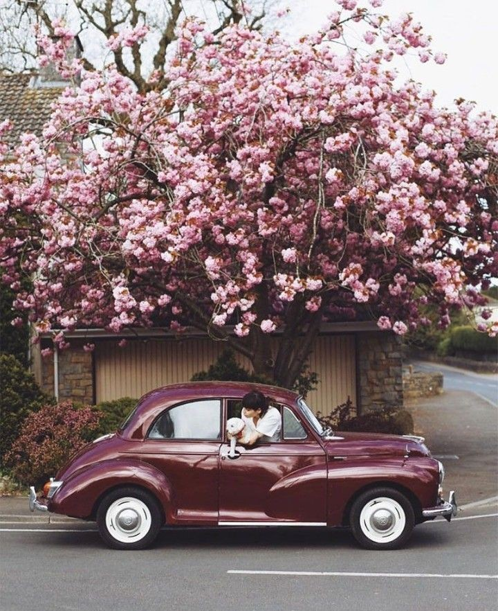maroon, petals, vintage and car