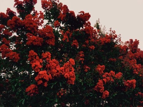 beautiful, red, nature and trees