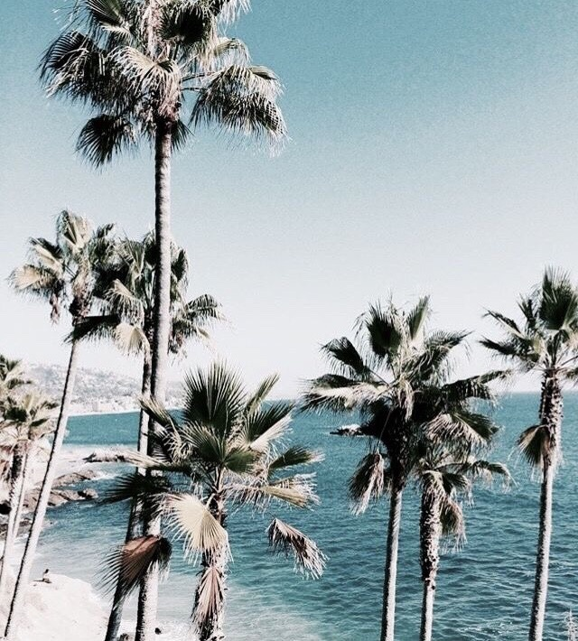summer, palm tree, tumblr and inspiration