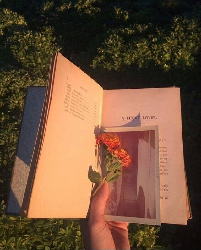 sun, poetry, aesthetic and golden hour