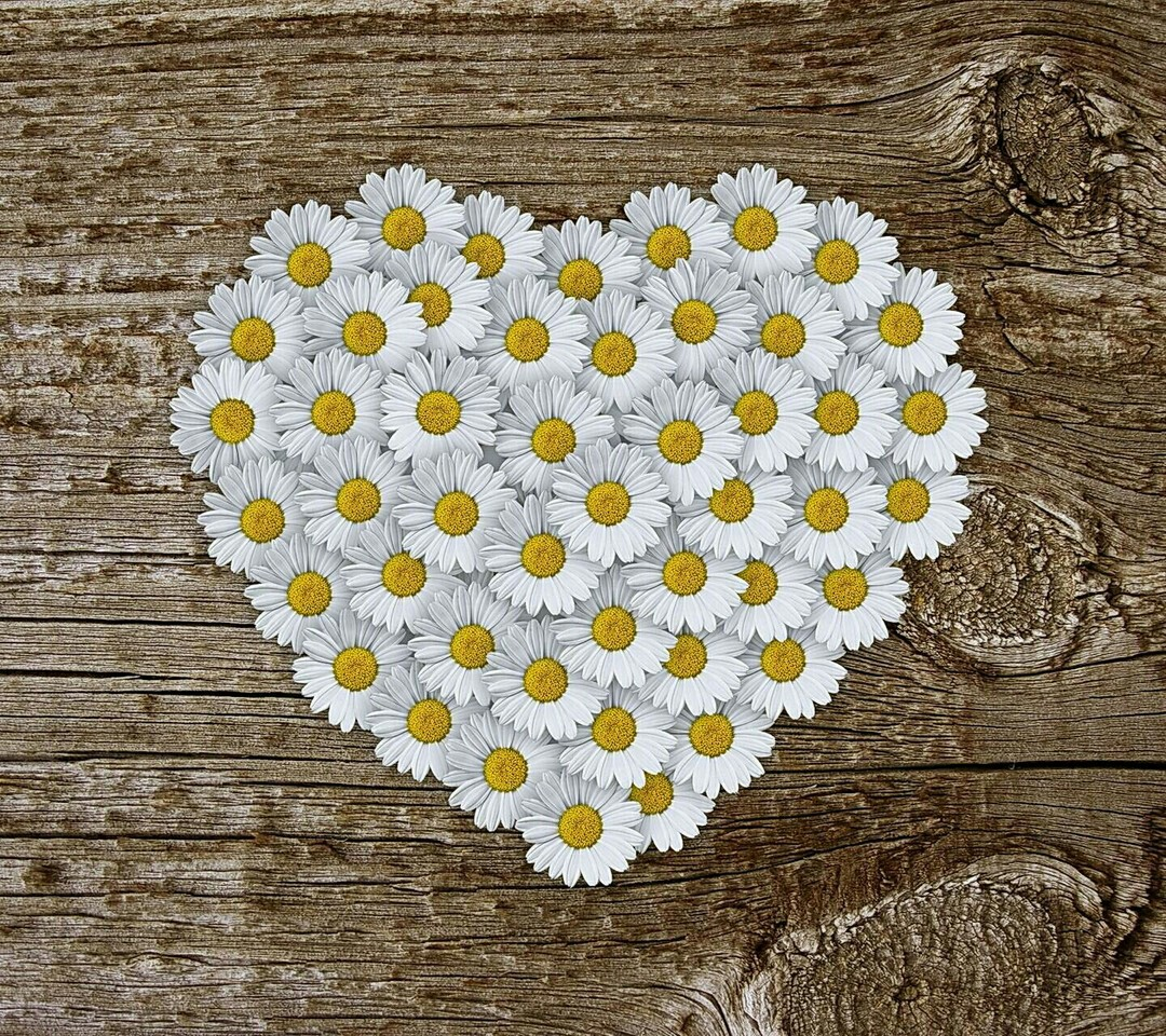 daisies, white, hearts and wood