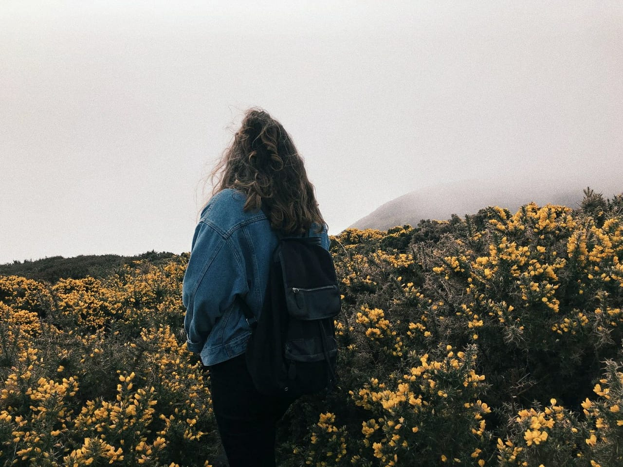 grunge, dublin, flowers and howth