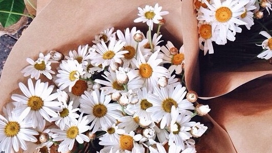 daisies, daisy, flowers and pretty