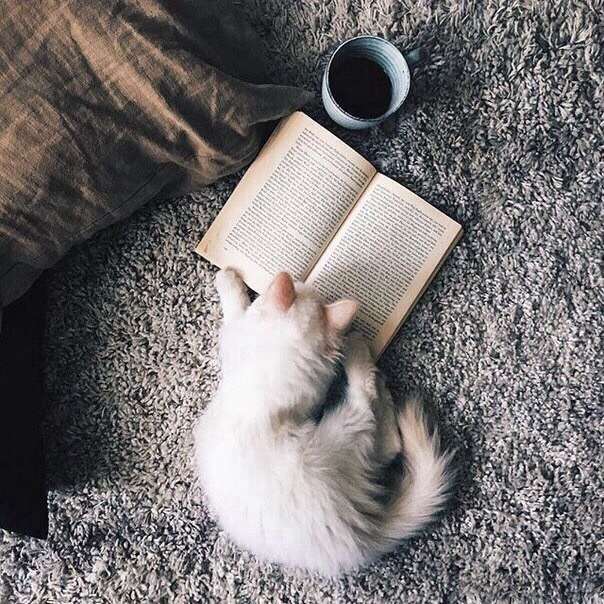 book, books, tumblr and adorable