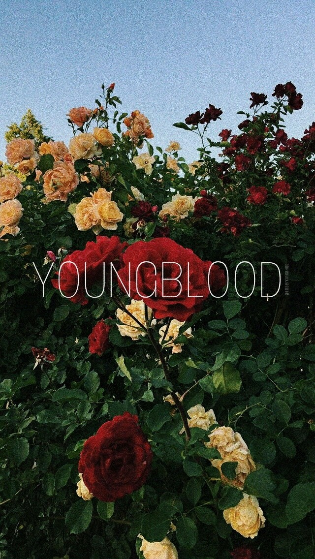 flowers, 5sos, background and youngblood