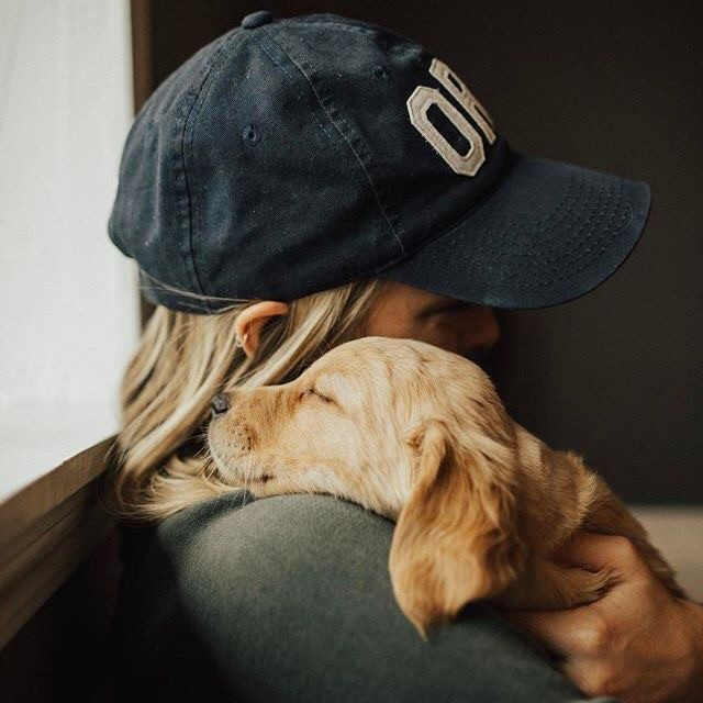 pets, classy, inspiration and aesthetic