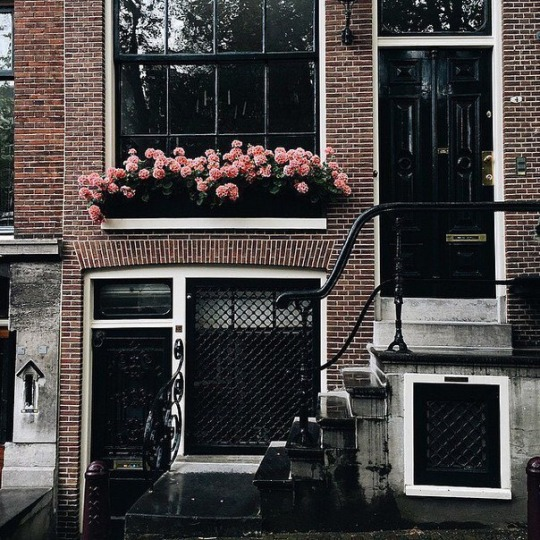 home, chic, roses and tumblr