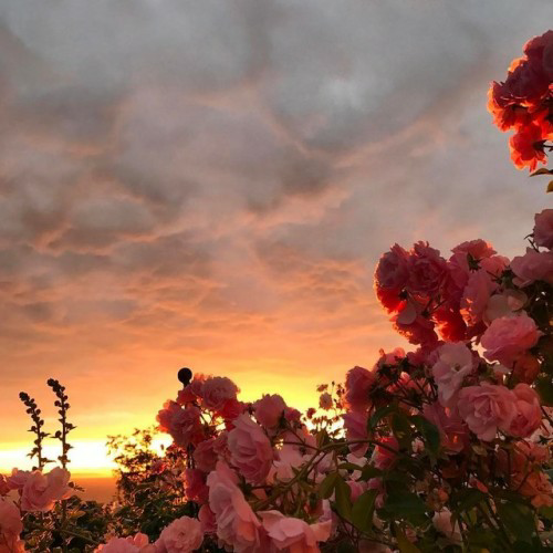 sky, clouds, red and flowers