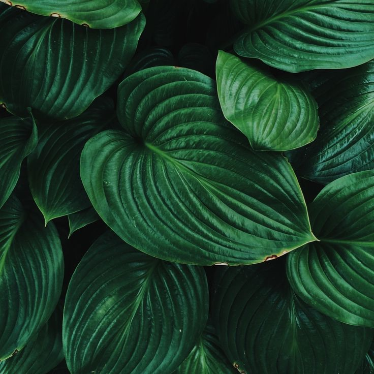leaves, green, clam and wallpaper
