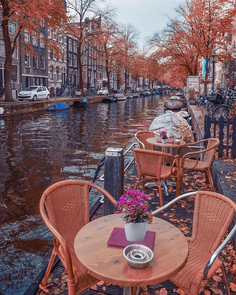 beautiful, flowers and amsterdam