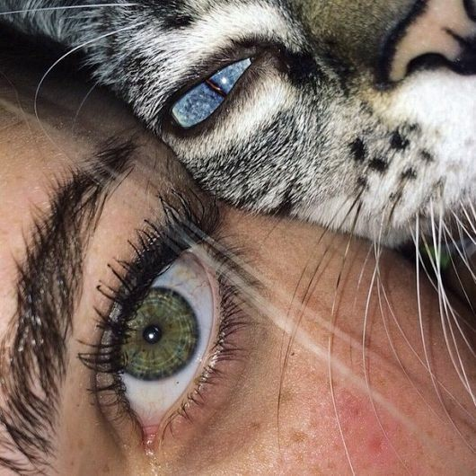 cats, animal, girl and eyes