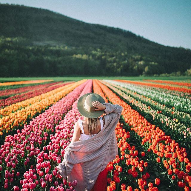spirit, freedom, pic and tulips