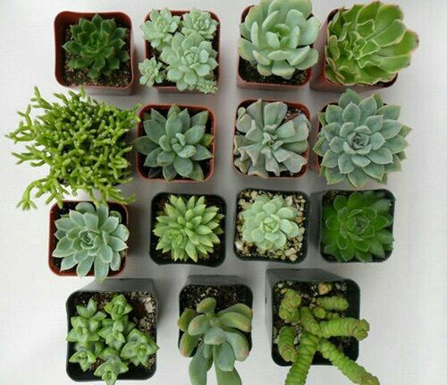 plants, aesthetic, succulent and dark green