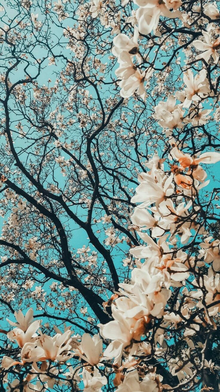 wallpaper, tree and flower