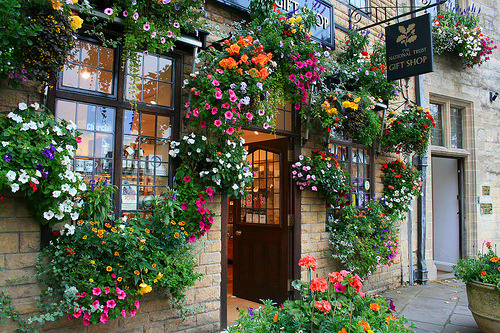 flowers, flower, window and shop