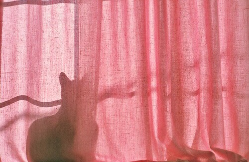 curtain, pink, grunge and vintage