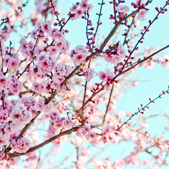 pink, spring, pretty and photo