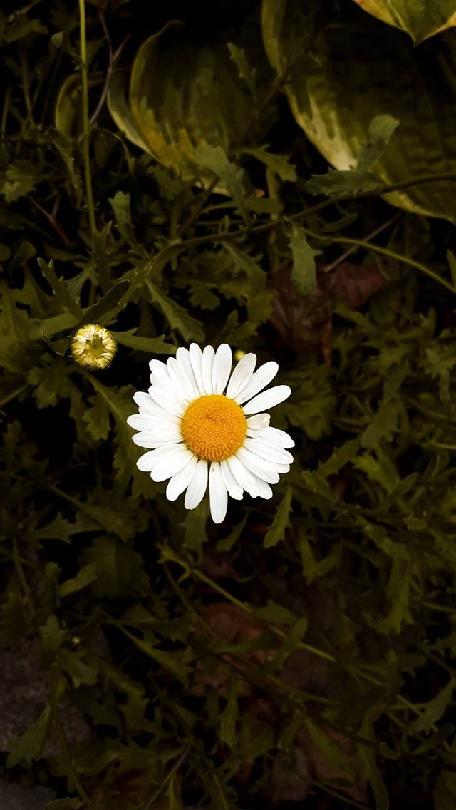 photography, bloom, inspiration and flowes