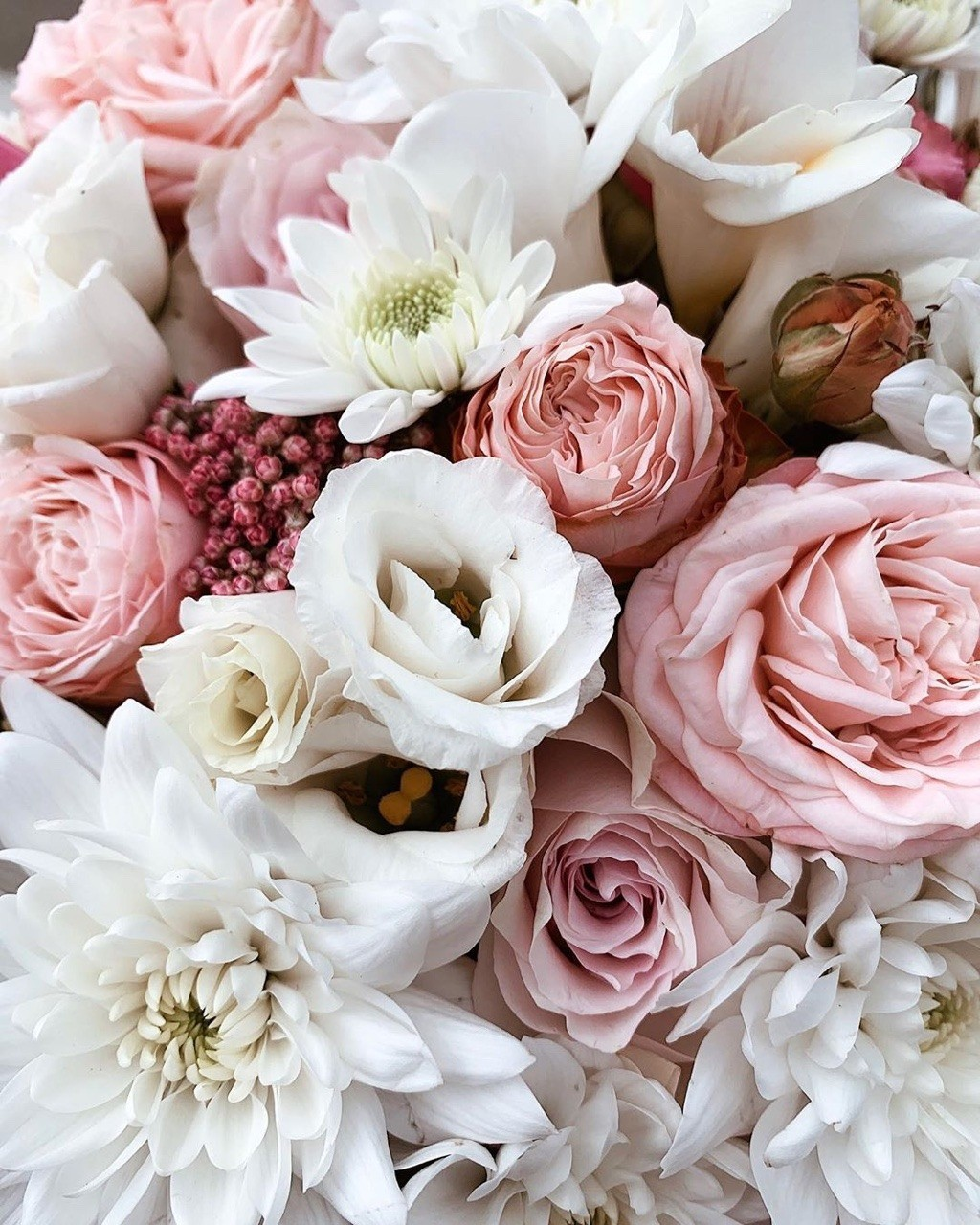 beautiful, beauty, colors and floral