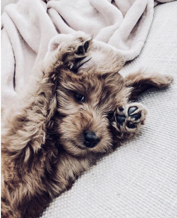 cute, dog, dogs and puppies