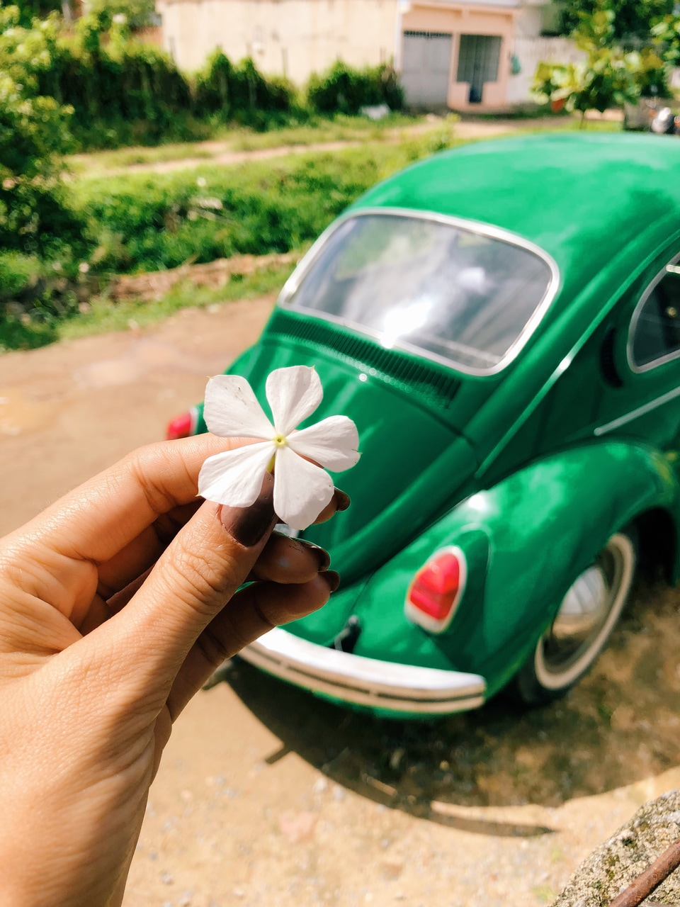 flowers, fusca, green and nature