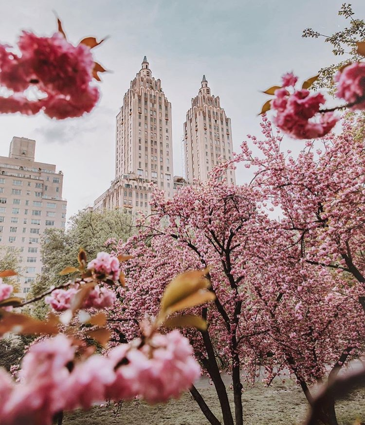 beautiful, buildings, city and flowers