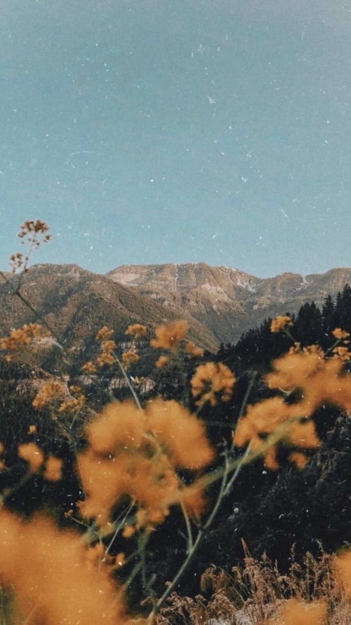 aesthetic, flowers, mountains and nature