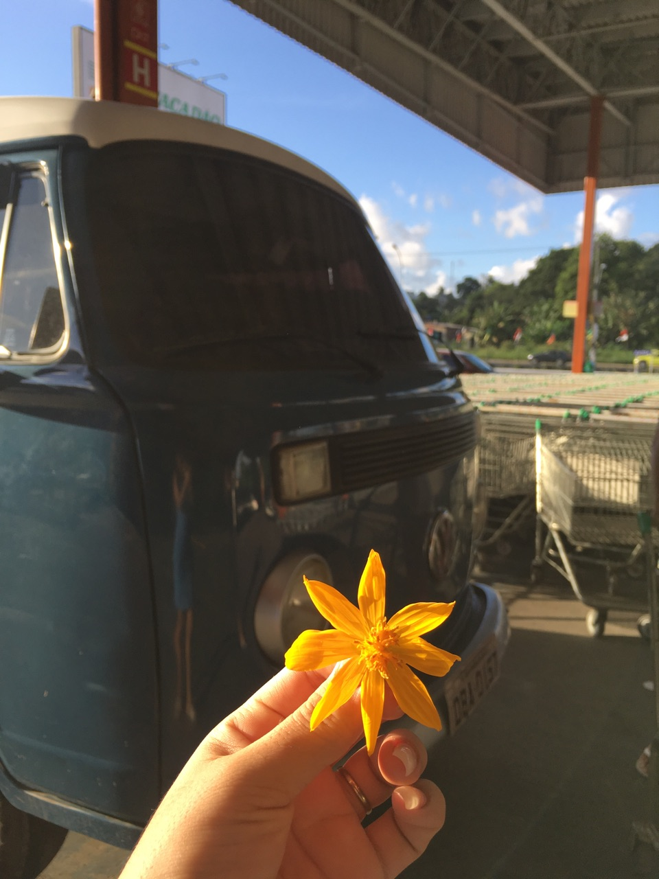 bloom, car, cleicy and flowes