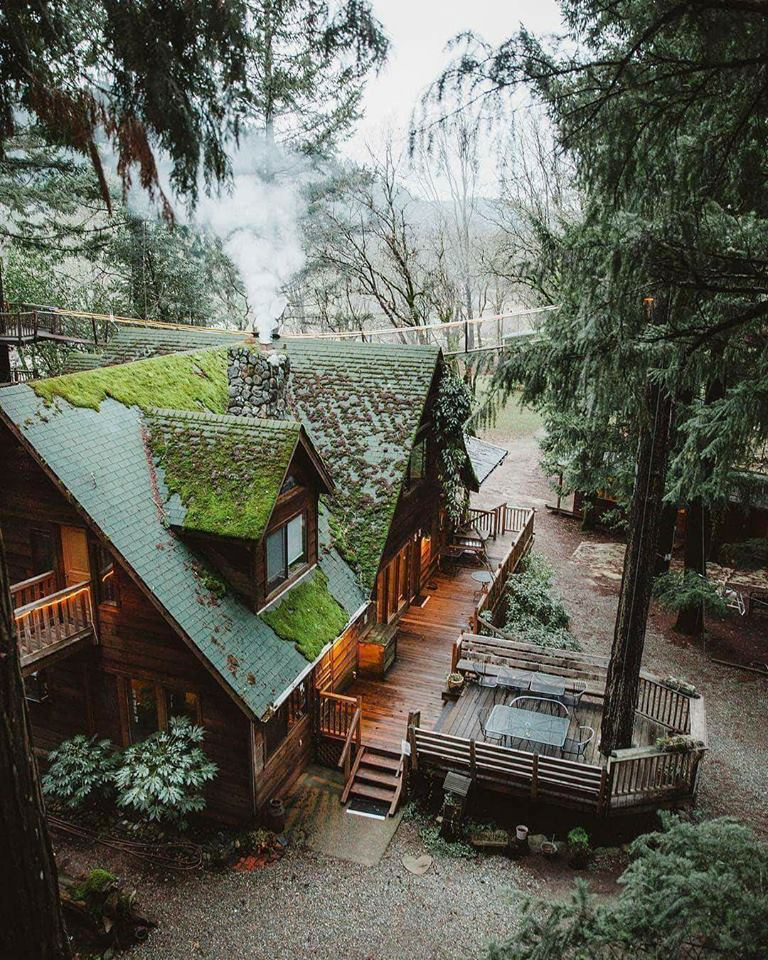nature, mountains, log cabin and forest