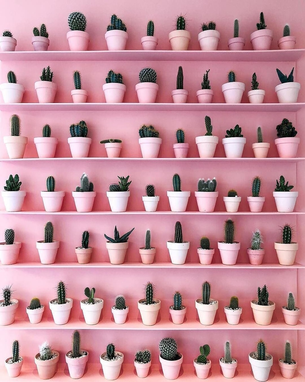 aesthetic, cactus, girls and girly