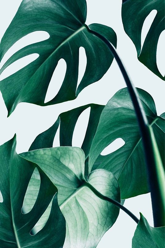 green, aesthetic, wallpaper and leaves