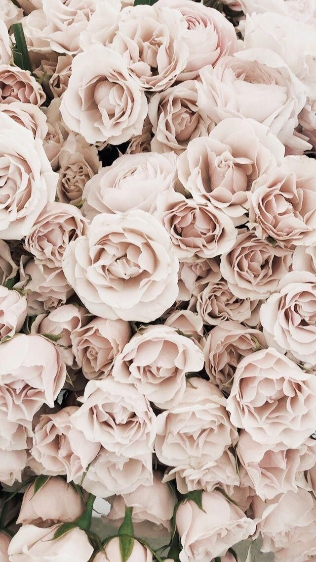 white, roses, faded and lock