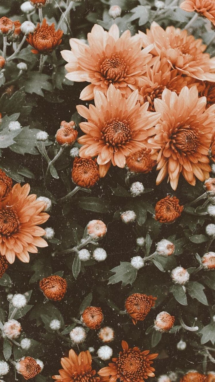 orange flower, flowers, faded and wallpaper