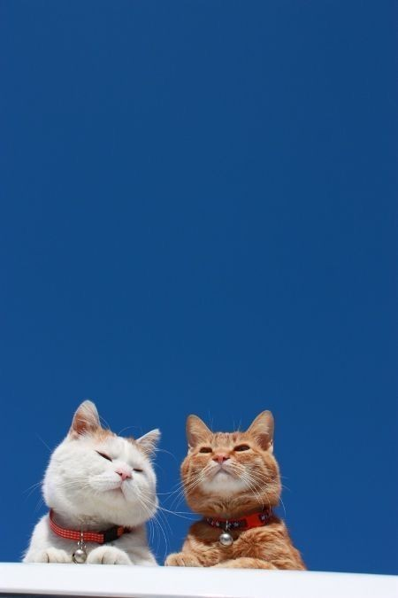 cute animal, animals, cute cats and cat