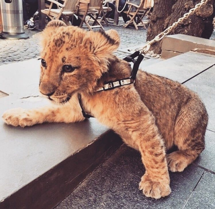 wild, cute, animal and baby