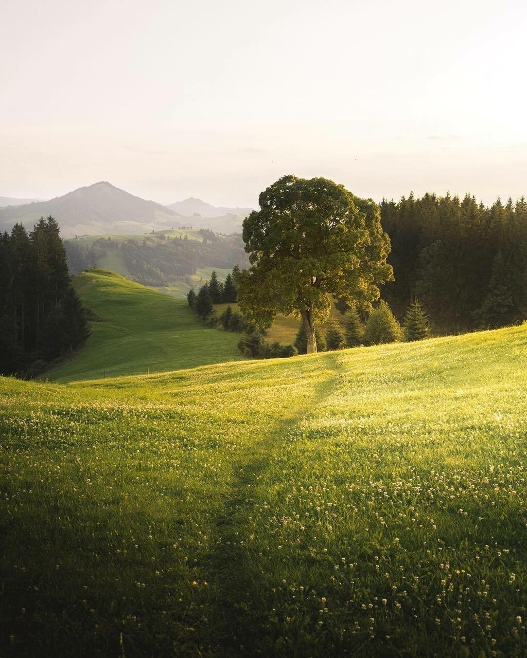 spring, trees, meadow and sun