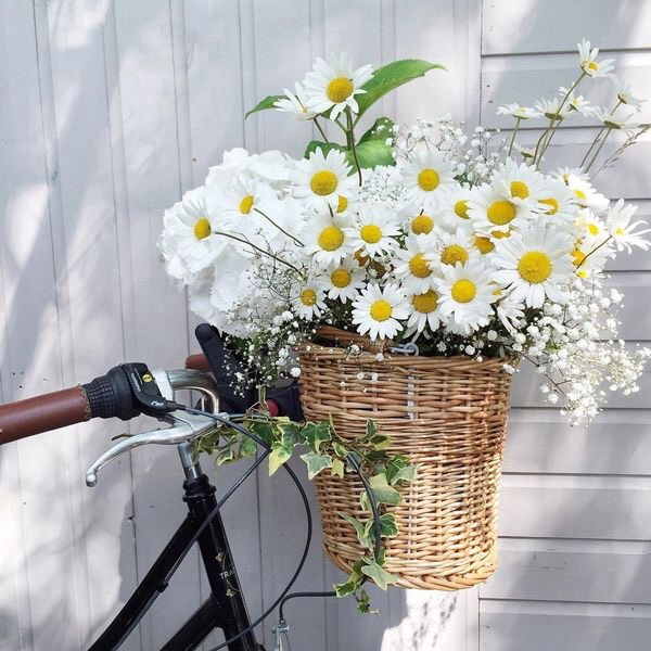 bicycle, summer, cute and chic