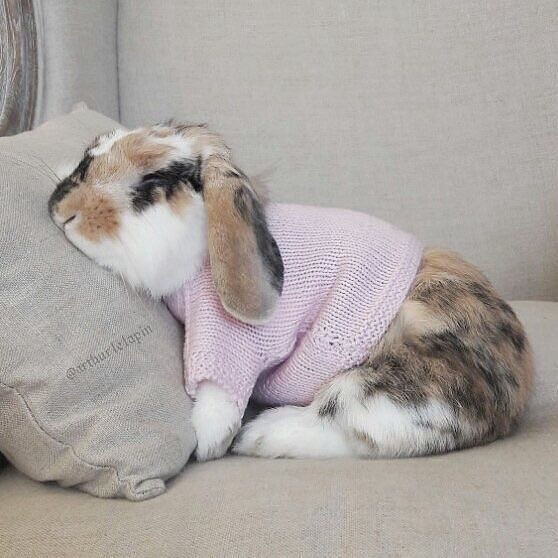 cute, photo, adorable and sweater