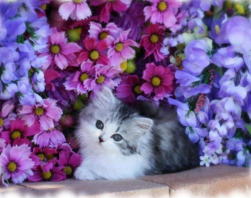 flowers, pet, blue and purple