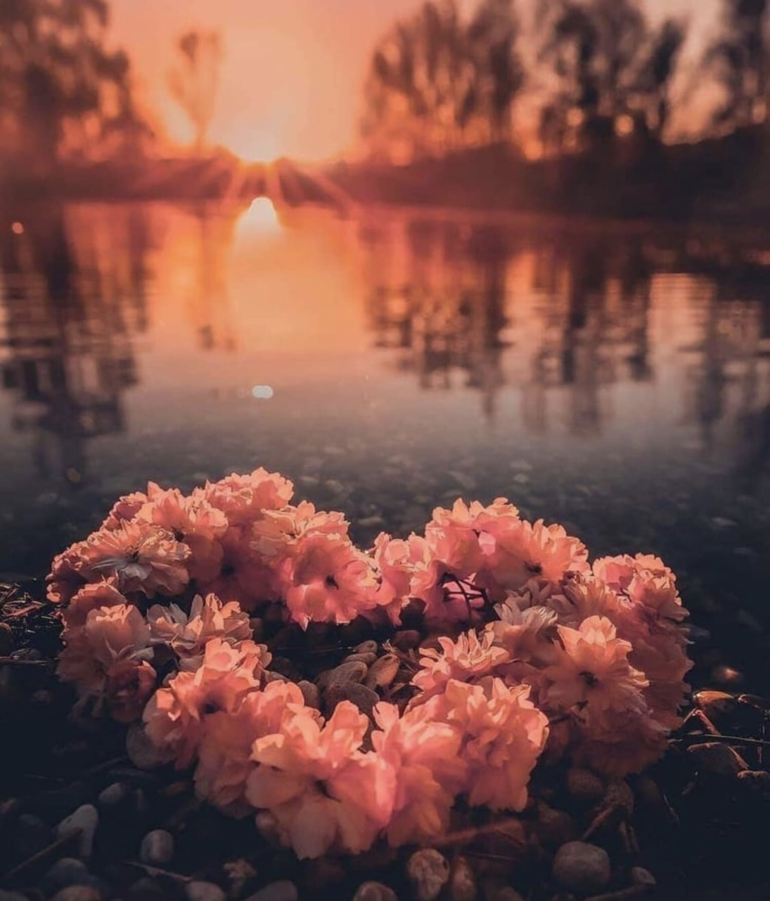 background, natur, iphone and we heart it